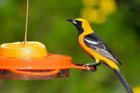 Backyard Bird meeting